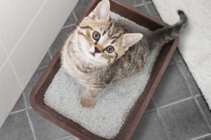 Adopt a Cat Litter Boxes In Your Home