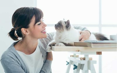 Signs Of Cat Love