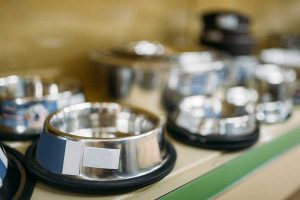Cat water dishes