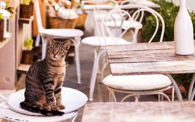 Travel with Your Cat (The Ultimate Guide)