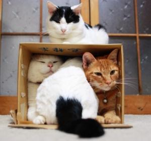 Pet Sitters love pets