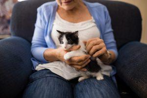 Kitten Senior Women lap