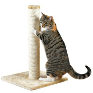 Keep Cats Healthy Scratching Post