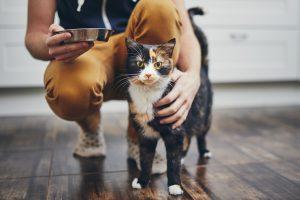 Adopt a Cat Feeding by Lady