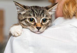 Adpt a Cat Kitten held by Vet