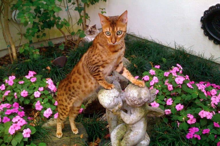 Cats at Home Pet Sitters Our Story