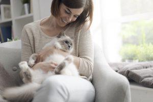 Keep Cats Healthy Lady Pamper Ragdoll Cat