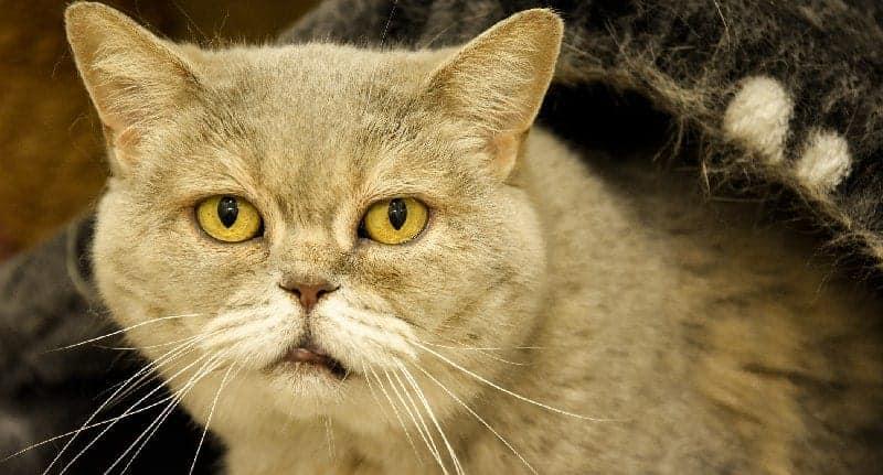 Senior Feline Care