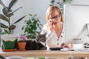 Cat Care & Biz Startuo