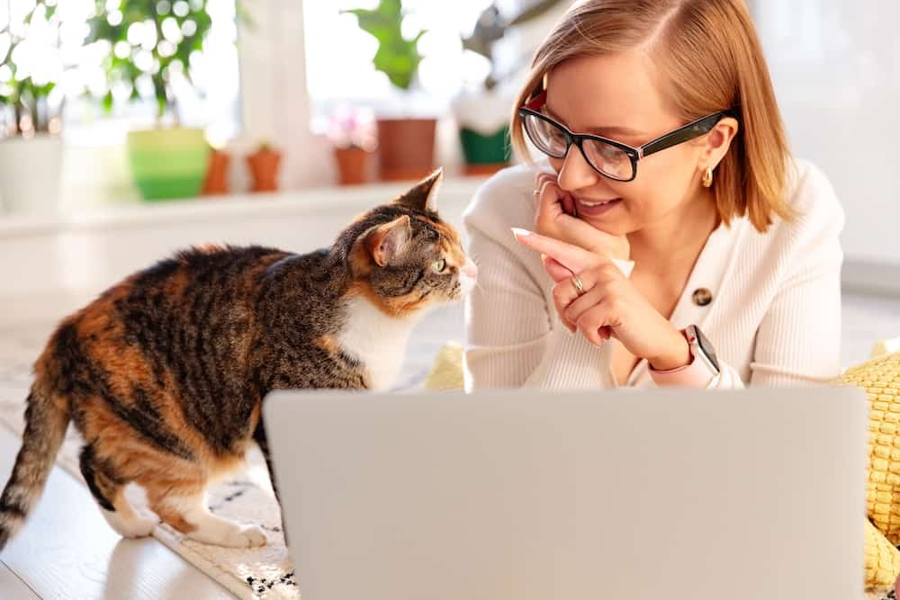 Cat Care With Business Startup