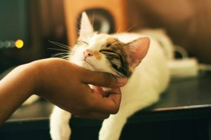 Scratching your cat chin