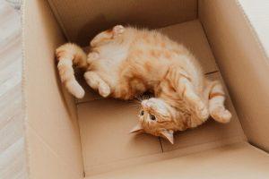 Orange laying in box
