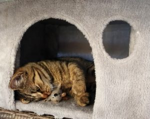 Cat in a cathouse with a toy