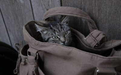 Cat in bag ahead of long-distane move
