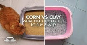 Corn VS Clay Cat Litter