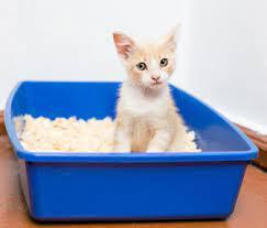 Kitten blue pan cat litter
