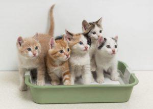 Kittens in Green Cat Litter Box