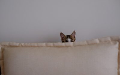 Safe Space Cat to Hide