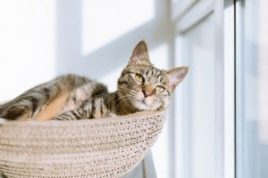 Cat relaing in basket new home