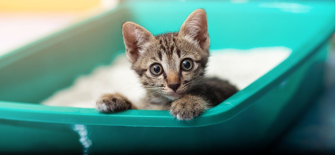 How to Choose Right Cat Litter