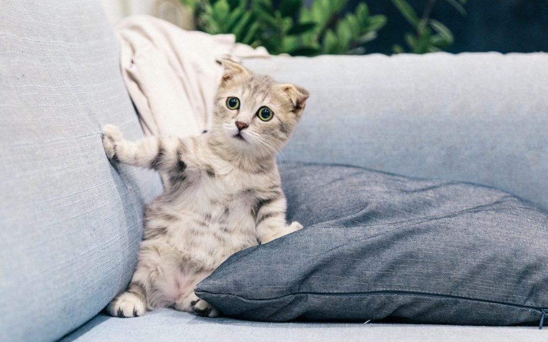 How Introduce Cat  to a New Home