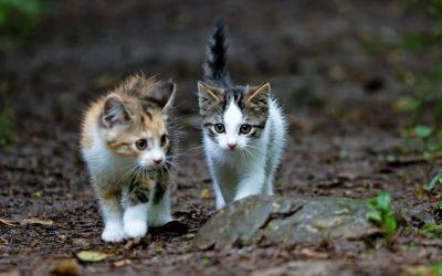 Abandoned stray cats